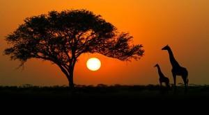 Afrika Turları ile Bakir Toprakları Keşfedin